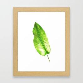 Calathea Whitestar Framed Art Print