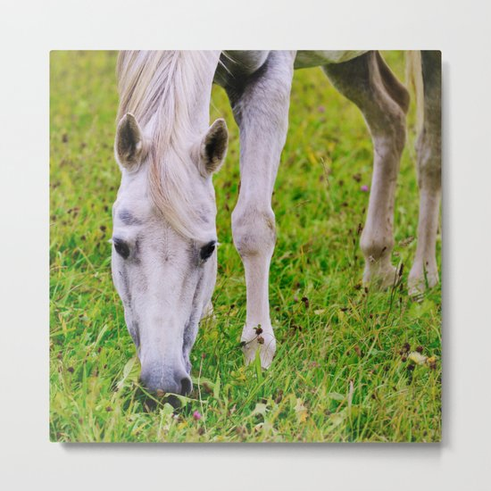White horse on green meadow Metal Print