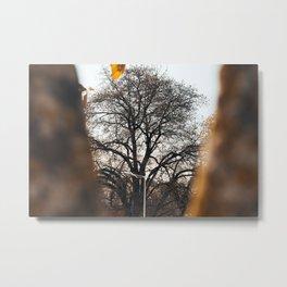 Tree through a tree Metal Print