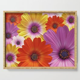 Colorful Medley of African Daisies Serving Tray