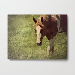 Paint Horse Mare Metal Print