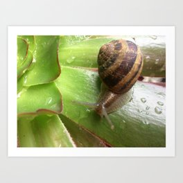 Snail on a Mission Art Print