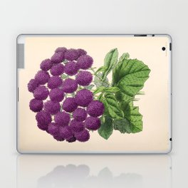 Double Cineraria Original hand-coloured print drawn and lithographed by Fitch Laptop & iPad Skin