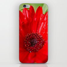 Red Gerber Daisy iPhone & iPod Skin