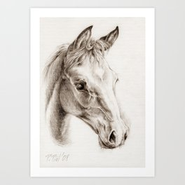 Colt pencil drawing Art Print