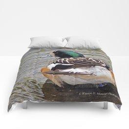 Chiloe Wigeon Comforters