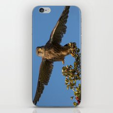 Kestrel iPhone Skin