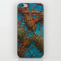 lobster iPhone & iPod Skins featuring Lobster by comma black