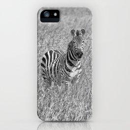 Zebra in high grass iPhone Case