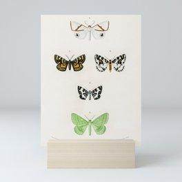 Vintage Butterflies Poster Mini Art Print