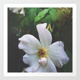 Flowers at Dusk Art Print