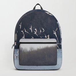 Bonaparte Gull Flock 2 Backpack