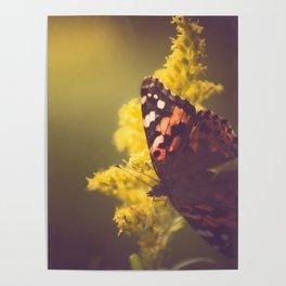 Sunlit Butterfly Poster