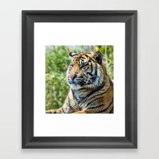 Tiger on guard Framed Art Print