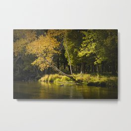 Autumn Scene of the Little Manistee River Metal Print