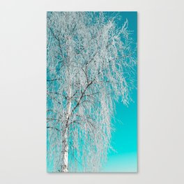 Birch tree with snow Canvas Print