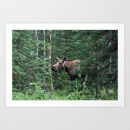 Alaskan Moose Art Print