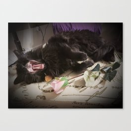 Plum Tuckered Out Canvas Print