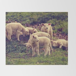 Lambs Throw Blanket