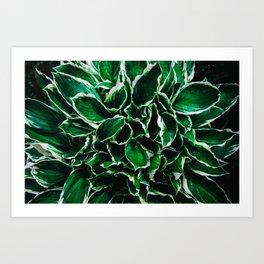 Hosta undulata albomarginata vibrant green plant leaves Art Print