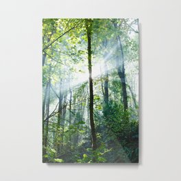 early morning rays Metal Print