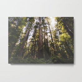 Sun through Redwood Trees Metal Print