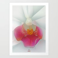 orchid Art Prints featuring Orchid by Dirk Petzold