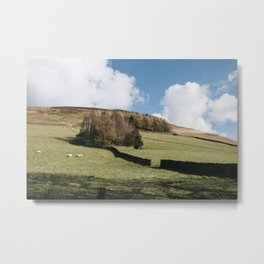 Grazing sheep and trees on a hillside. Edale, Derbyshire, UK. Metal Print
