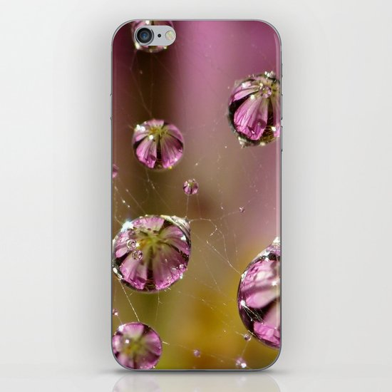 who knew a web could hold such treasures? iPhone & iPod Skin