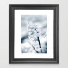 Blue Hyacinth Framed Art Print