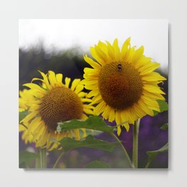 Sunflowers at Eden Project Metal Print