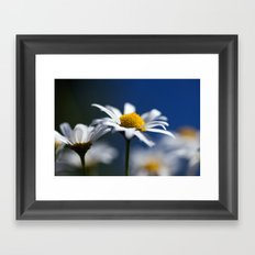 Marguerite Daisy3609 Framed Art Print