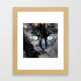 Fluffy's eyes Framed Art Print