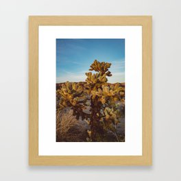 Cholla Cactus Garden Framed Art Print