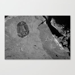 Utah - Trilobite Fossil Shards Canvas Print