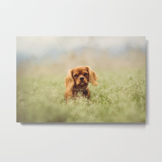 Cute Puppy - Little Dog Metal Print