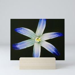 Glorious blue Mini Art Print