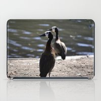 ducks iPad Cases featuring Ducks by Phil Hinkle Designs