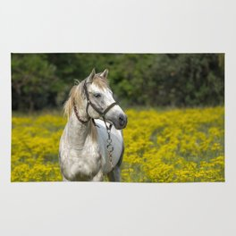 Gray Horse in a Field of Yellow Mustard Rug