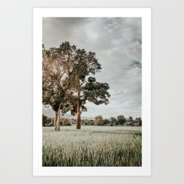 Thai landscape, last sunbeams of the day over paddy field Art Print
