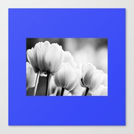 small blue tulips Canvas Print