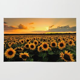 Sunflower field Rug