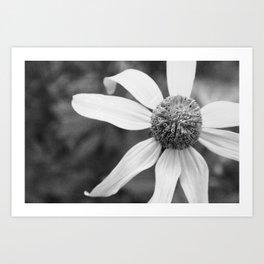 Wildflower Top BW Art Print