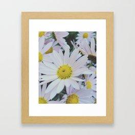 Daisy dream Framed Art Print