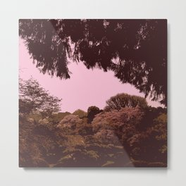 Hana Collection - Shinjuku Gyoen Cherry Blossoms Metal Print