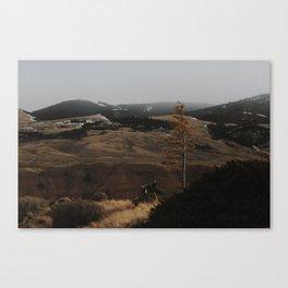 Lonely Birch Canvas Print