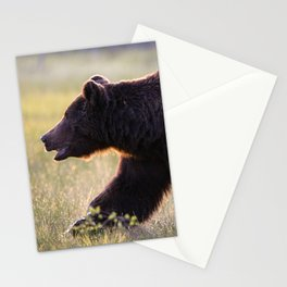 Brown bear in backlight Stationery Cards