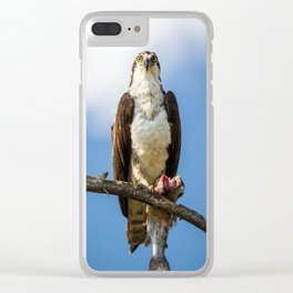 Osprey Eating a Fish Clear iPhone Case