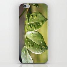 Fresh Dew Drops iPhone & iPod Skin