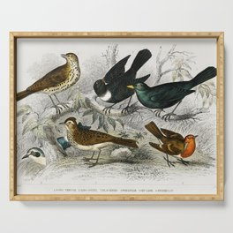 Song Thrush Ring Ouzel Blackbird Wheat Ear Sky Lark and Redbreast from A history of the earth and an Serving Tray